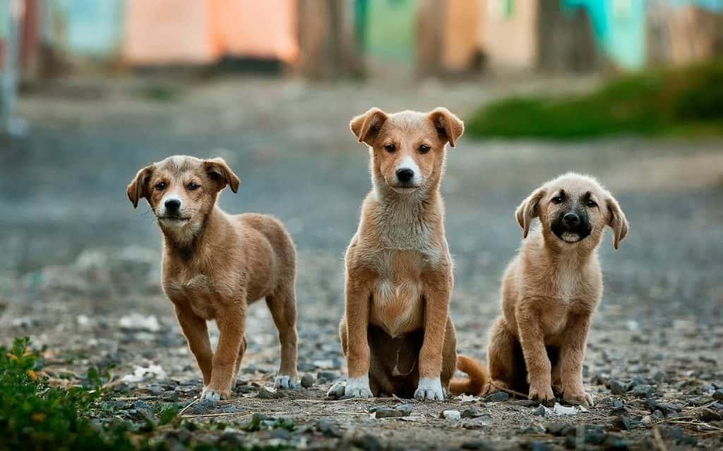 Drei Hunde warten.