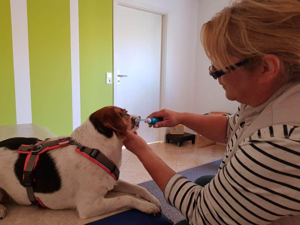Bild Zahnreinigung beim Hund