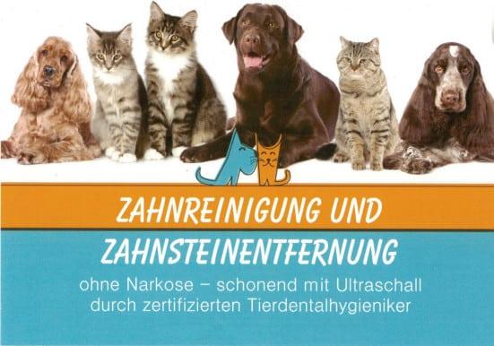 Flyer Tierheilpraxis Bitterfeld Zahnreinigung